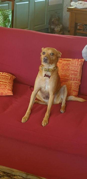 Il nostro primo ospite pelosetto , Osso cagnolino molto simpatico. Grazie di cuore ai proprietari per la disponibilità a...